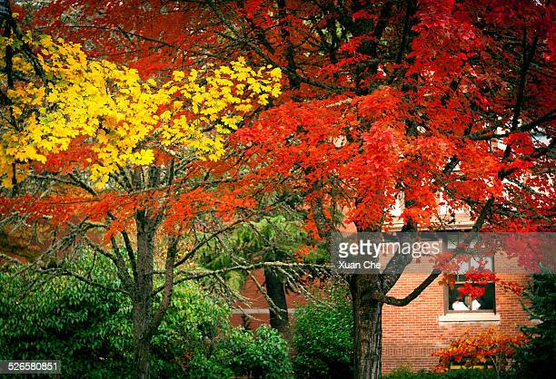colorful red, yellow and green leaves in autumn - xuan che stock pictures, royalty-free photos & images