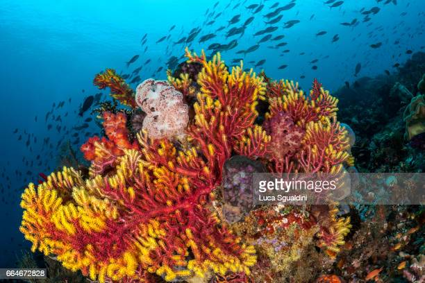 colorful reef - raja ampat islands stock photos and pictures