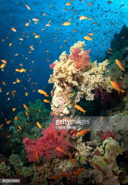 Colorful reef scene