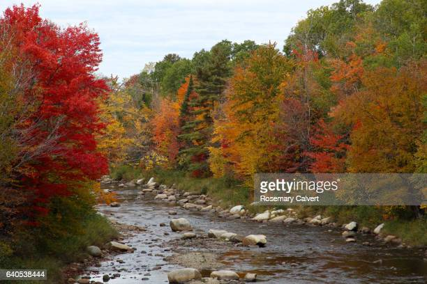 colorful river scene in autumn, new hampshire, usa. - swift river stock photos and pictures