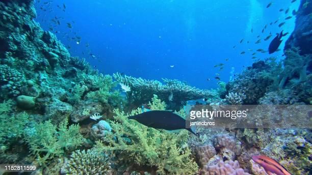 colorido fondo marino. paisaje submarino - vida marítima fotografías e imágenes de stock
