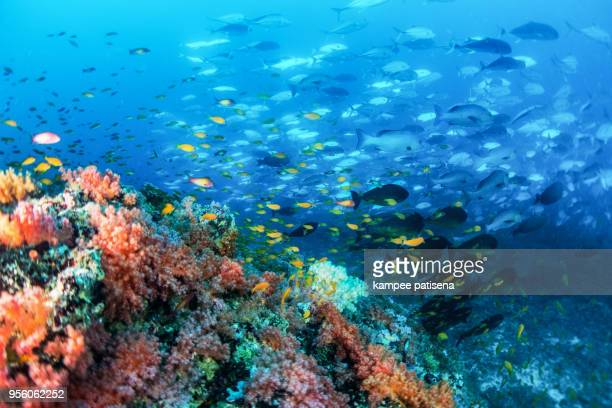 colorful soft coral and fish school on a reef in the ocean, Maldives