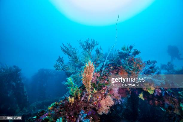 colorful soft corals against the sun, and silhouette of a diver. - sea life stock pictures, royalty-free photos & images