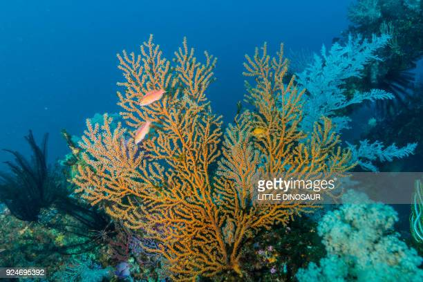 Colorful soft corals growing on artificial fish reef