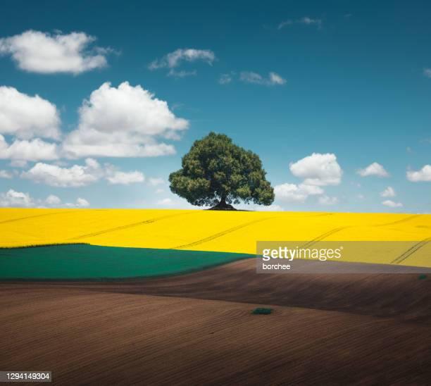 campo primaverile colorato - terra coltivata foto e immagini stock