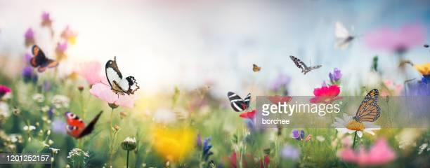 bunte sommerwiese - wiese stock-fotos und bilder