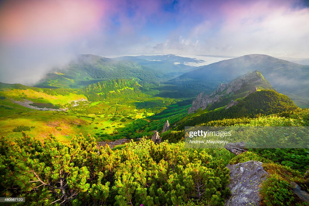 Colorful summer sunrise in the foggy Carpathian mountain : Stock Photo