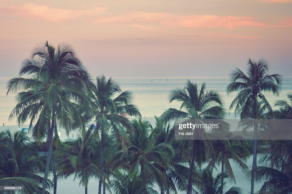 Colorful sunset in Miami beach : Stock Photo