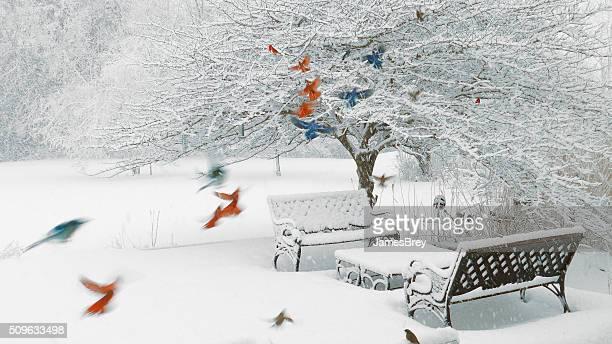 Colorful Survival; Cardinals, bluejays, sparrows, junco, woodpecker in a blizzard