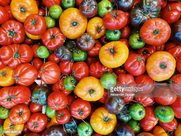 colorful tomatos on the farmer's market - tomato stock pictures, royalty-free photos & images
