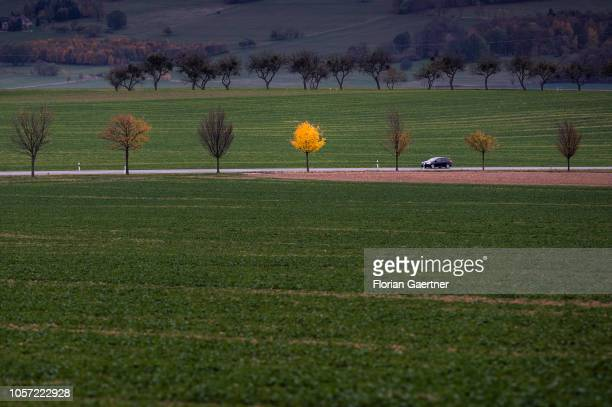 A colorful tree is pictured next to a country road on November 02 2018 in Reichenbach Germany