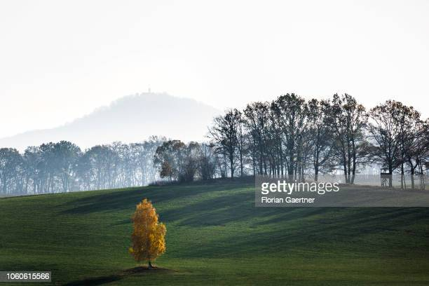 A colorful tree on a field is pictured in front of the Landeskrone near Goerlitz on November 10 2018 in Koenigshain Germany
