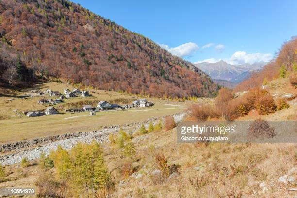 Colorful trees in autumn in Loana valley, Verbano Cusio Ossola province, Piedmont, North italy, Italy