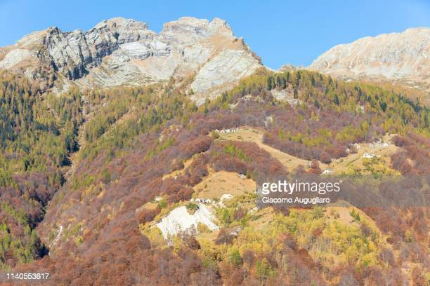Colorful trees on the mountains,  Val Vigezzo, Verbano Cusio Ossola province, Piedmont, North italy, Italy