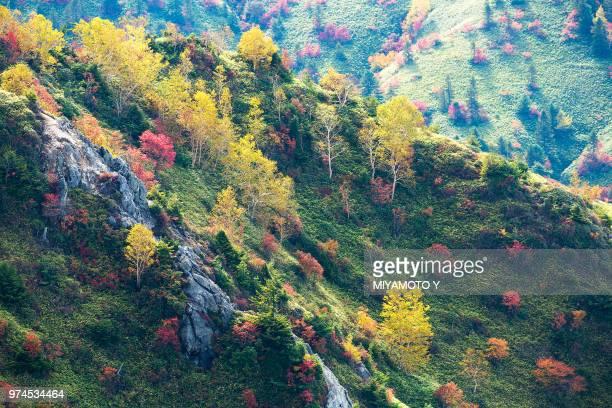 colorful trees - miyamoto y ストックフォトと画像