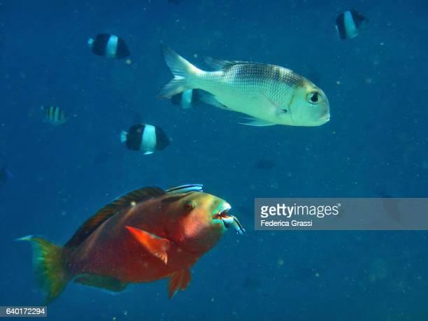 Colorful Tropical Fish On Maldivian Lagoon