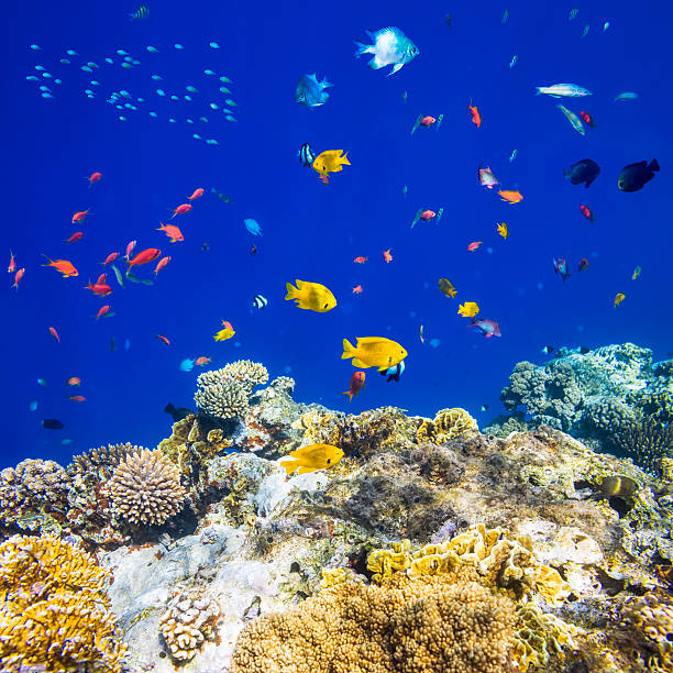 Colorful tropical fish on Red sea
