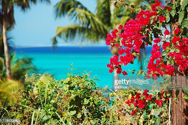 Colorful tropical flowers and Caribbean Sea