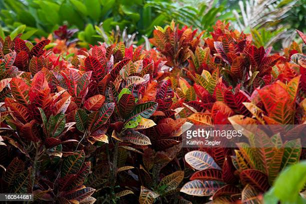 colorful tropical foliage