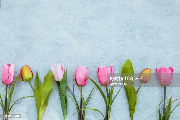 colorful tulip flowers decoration on white wooden background - march month stock pictures, royalty-free photos & images