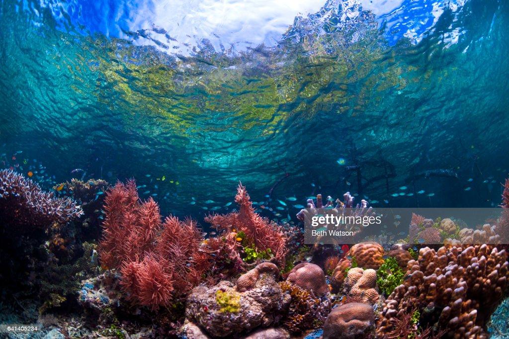 Colorful Underwater Seascape : ストックフォト