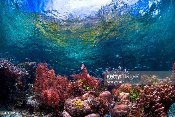 colorful underwater seascape - reef stock pictures, royalty-free photos & images