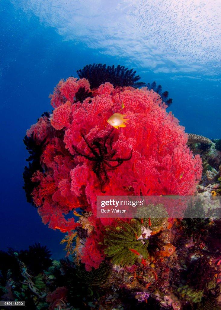 Colorful Underwater Seascape : Stock Photo