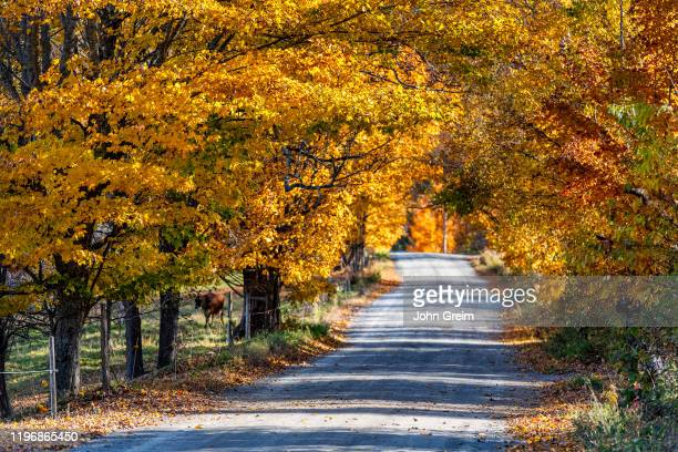 Colorful unpaved country road.