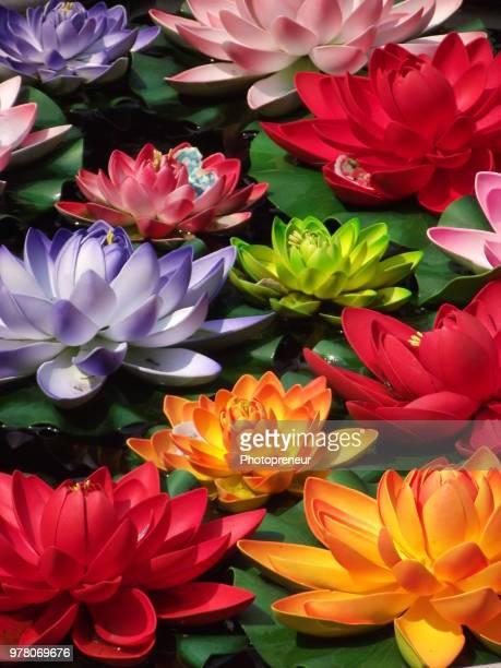 colorful water lilies, wen miao, shanghai, china - pianta acquatica foto e immagini stock