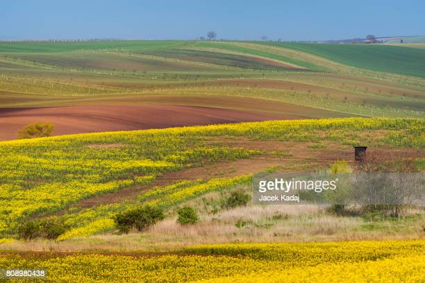 Colorful wavy hills