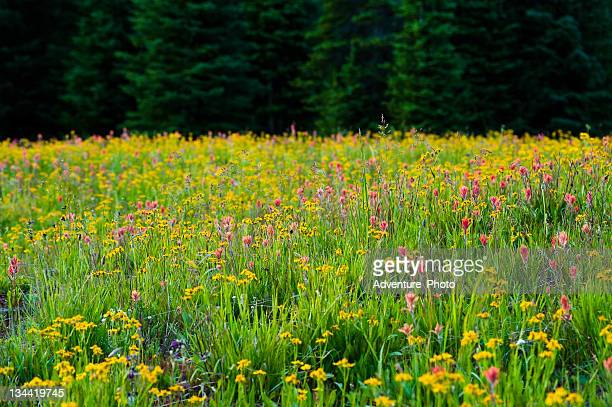 Colorful WIldflower Medley