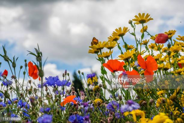 Colorful Wildflowers in Summertime & Tiny Gatekeeper Butterfly