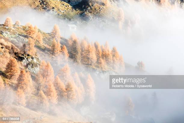 Colorful woods in the mist Sils Switzerland