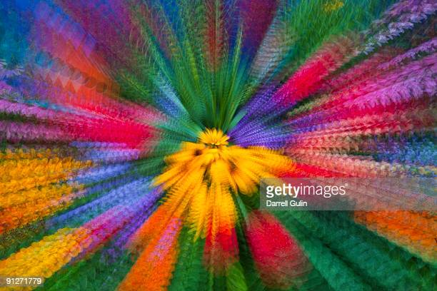 Colorful Zoom Effect with Flowers