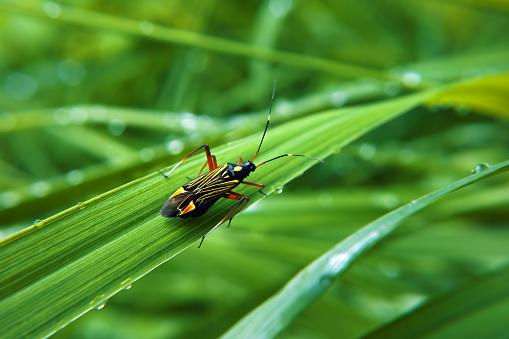 Colorfull bug at green grass 666375172