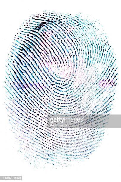colorised fingerprint on white paper - fingerprint stock pictures, royalty-free photos & images