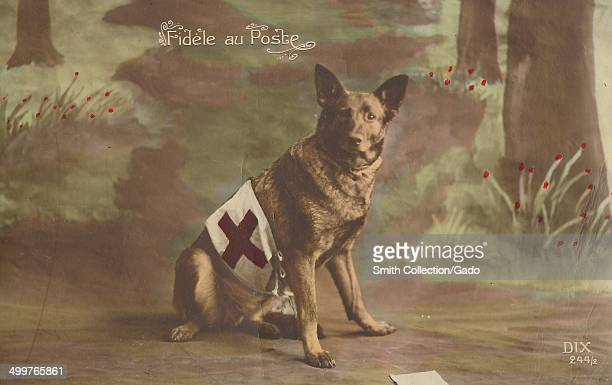 Colorized postcard of a German Shepherd military dog wearing a red cross vest sitting proudly in the woods of France during World War I, France,...