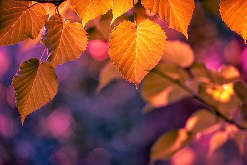 Colors of autumn 1044444978
