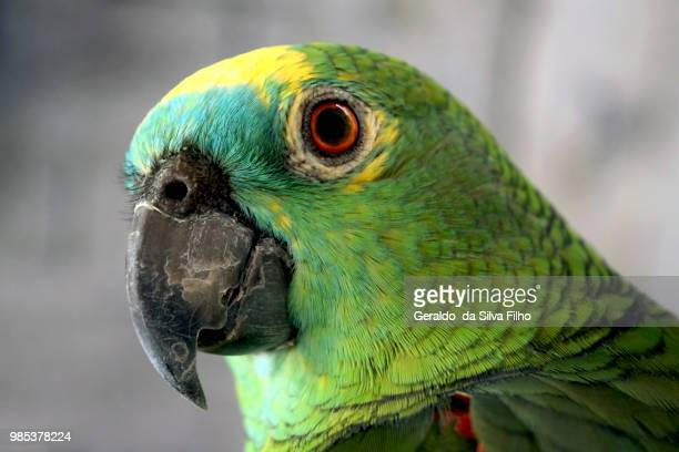 colors of brazil - filho stock pictures, royalty-free photos & images