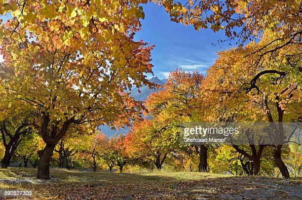 colors of hunza - gilgit baltistan stock photos and pictures