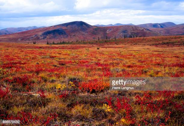 colors of the arctic fall (late august) on the ogilvie mountains, naer the dempster highway, yukon - canada - tundra stock-fotos und bilder