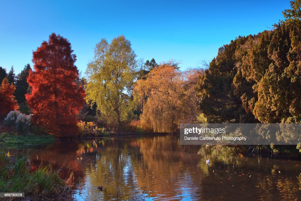 Colors of the fall : Stock Photo