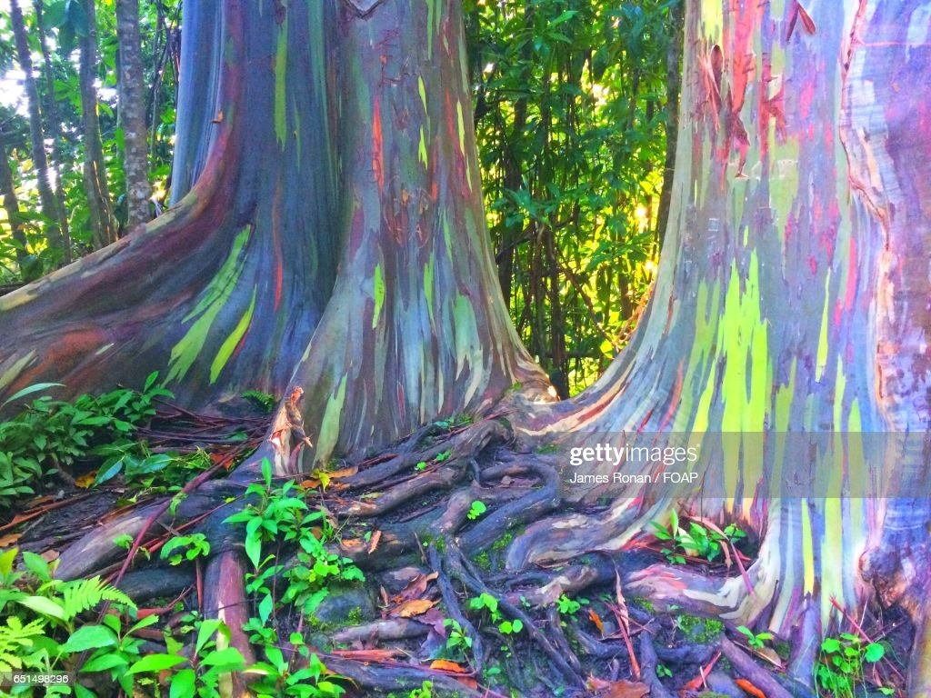 Colors On Tree Bark Stock Photo   Getty Images