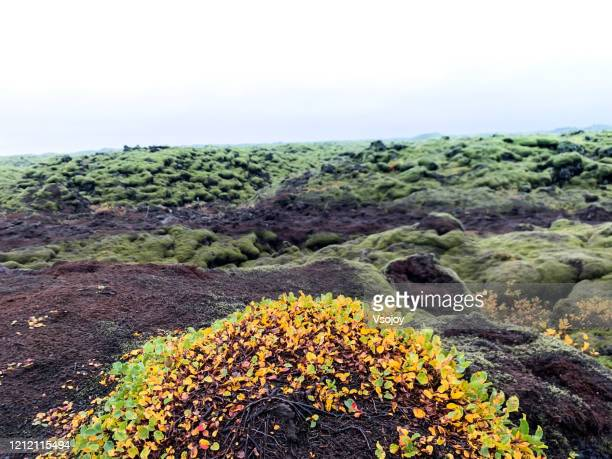 colour at the mossy lava field, southern iceland, iceland - vsojoy stock pictures, royalty-free photos & images