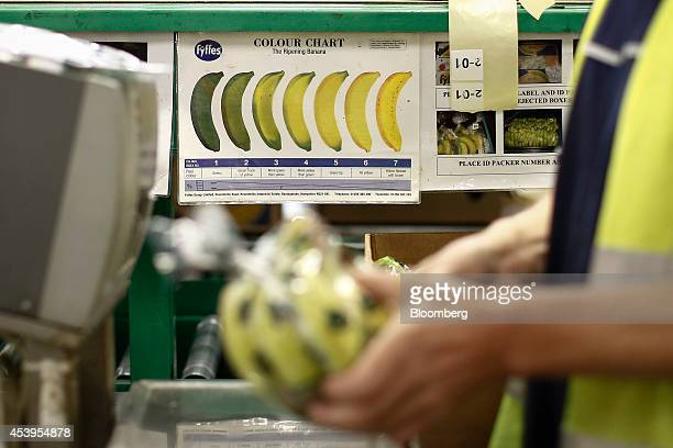 A Colour Chart for checking the ripeness of bananas sits attached to the production line as an employee sorts bunches of Fyffes bananas at Fyffes...
