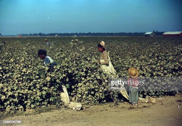 Colour photograph of day labourers picking cotton near Clarksdale Mississippi Delta Photographed Marion Post Wolcott American photographer who worked...