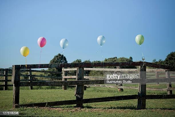 Coloured ballons on farm fence