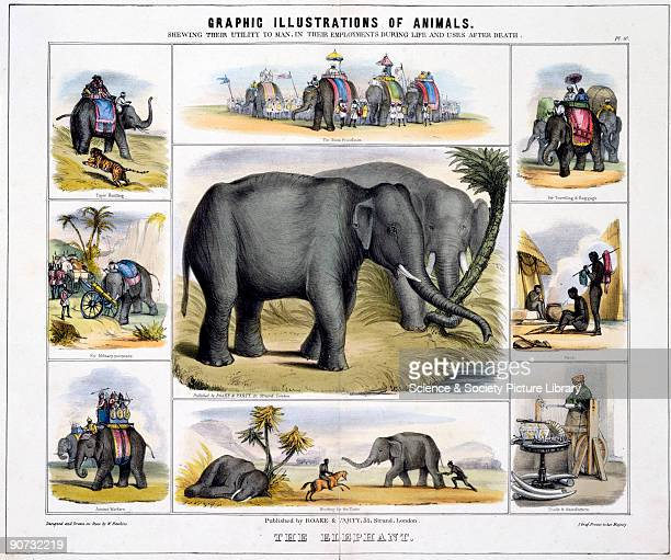 Coloured lithographic plate showing the elephant from 'Graphic Illustrations of Animals Showing Their Utility to Man in Their Employment During Life...