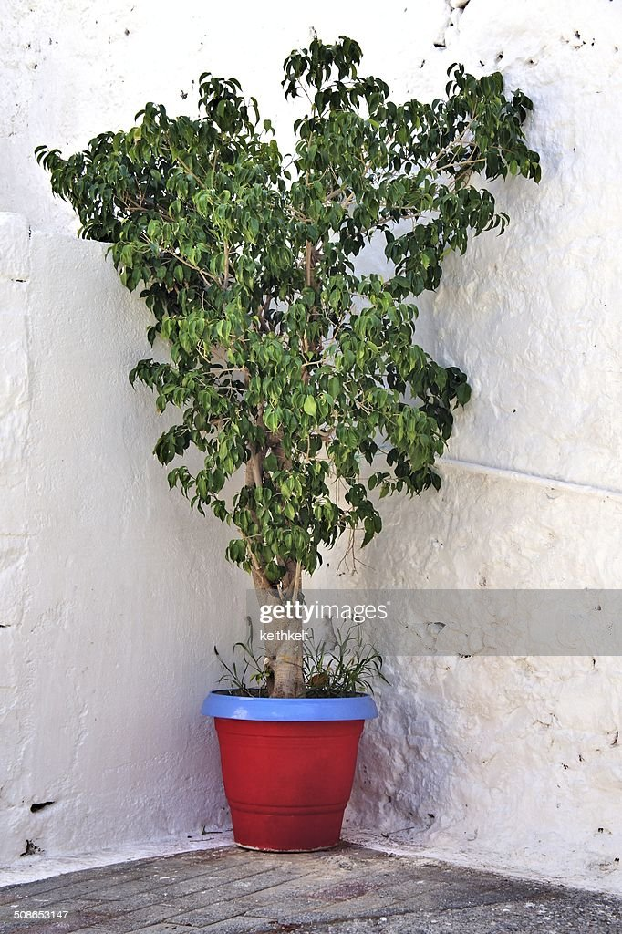 coloured plant pot : Stock Photo