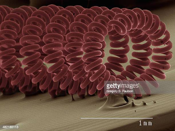 Coloured SEM of projector bulb filament